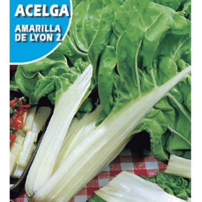 ACELGA AMARILLA DE LYON
